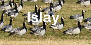 Islay Bird Tour
