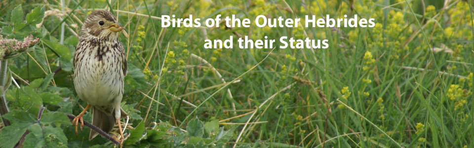 Birds of the Outer Hebrides - their status