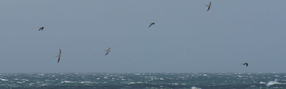 Corncrakes and Skuas tour
