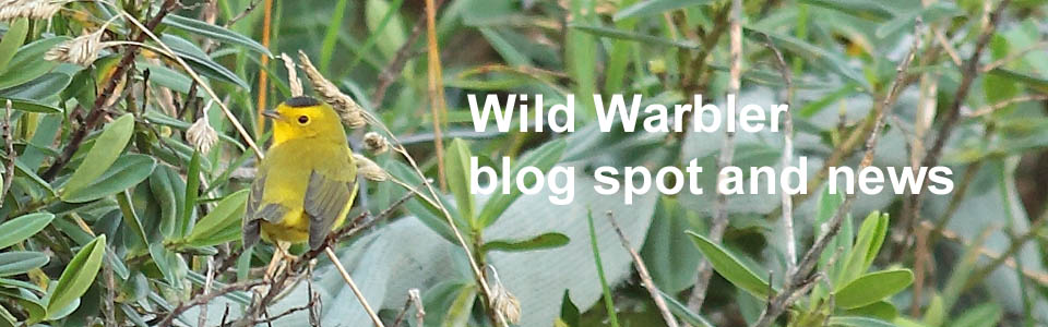 Wild Warbler blog and news